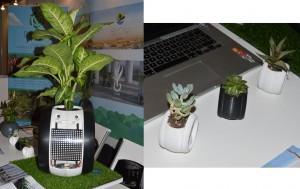 Plante connectée
